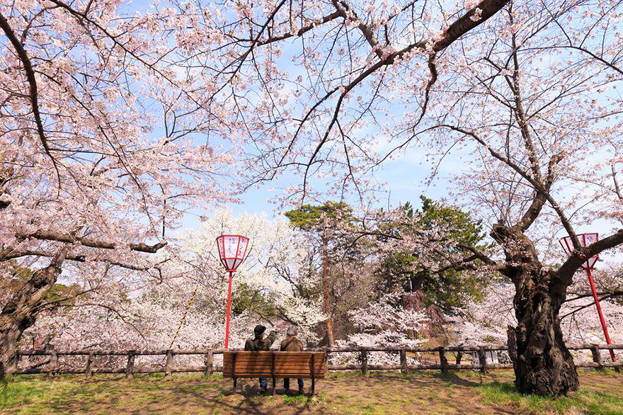 spring-japan-cherry-blossoms-national-geographics-161.jpg