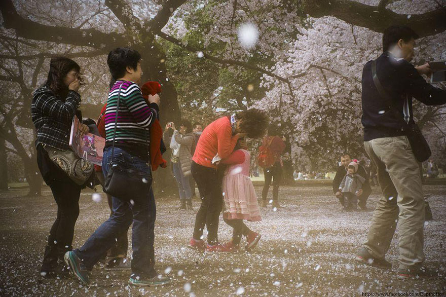 spring-japan-cherry-blossoms-national-geographics-171.jpg