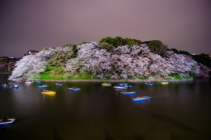 spring-japan-cherry-blossoms-national-geographics-191.jpg