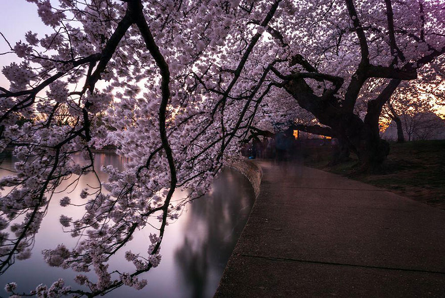 spring-japan-cherry-blossoms-national-geographics-210.jpg