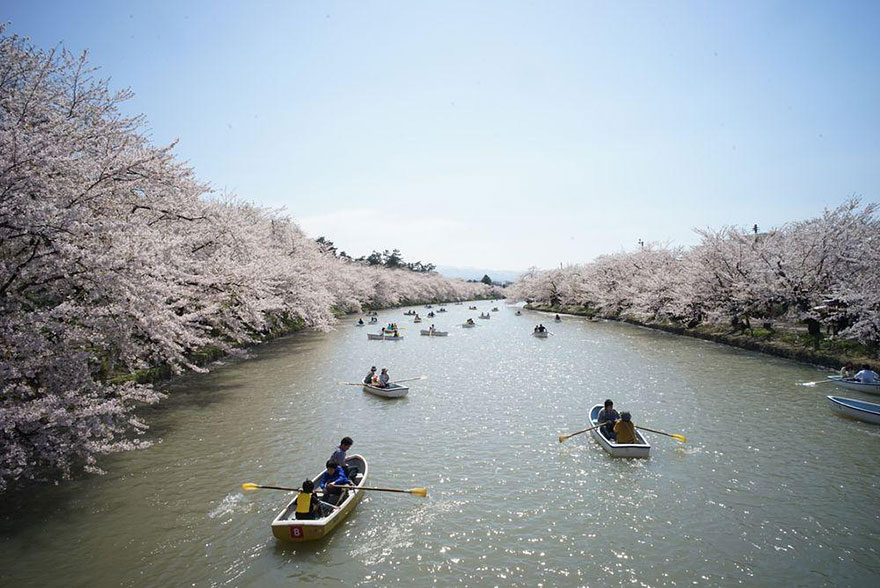 spring-japan-cherry-blossoms-national-geographics-231.jpg