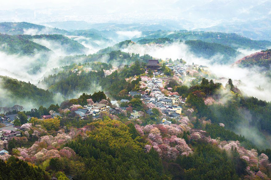 spring-japan-cherry-blossoms-national-geographics-241.jpg
