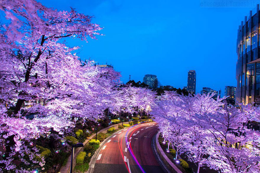 spring-japan-cherry-blossoms-national-geographics-91.jpg