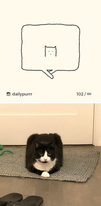 stupid-cat-drawings-dailypurrr-1-5af0179810d7e_605.jpg
