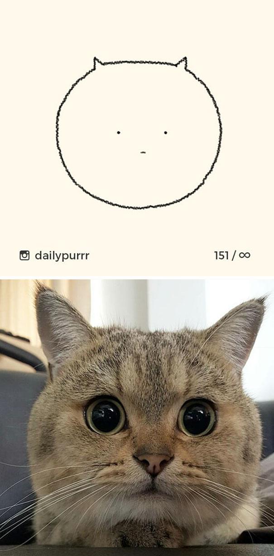 stupid-cat-drawings-dailypurrr-11-5af017aa644d0_605.jpg