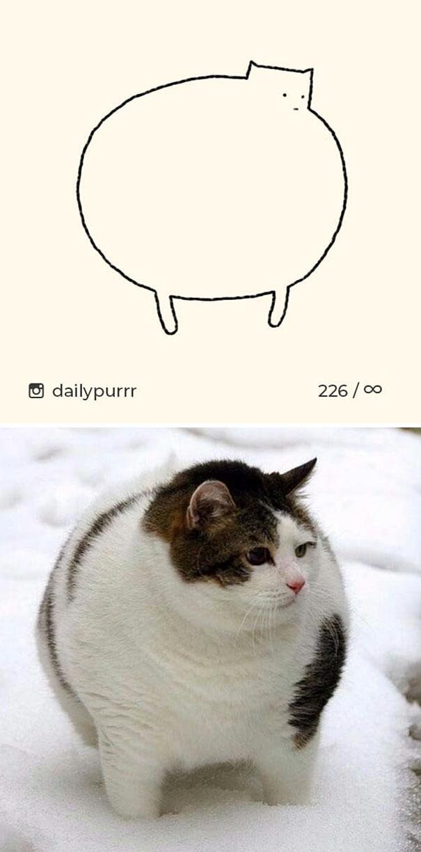 stupid-cat-drawings-dailypurrr-15-5af017b379655_605.jpg