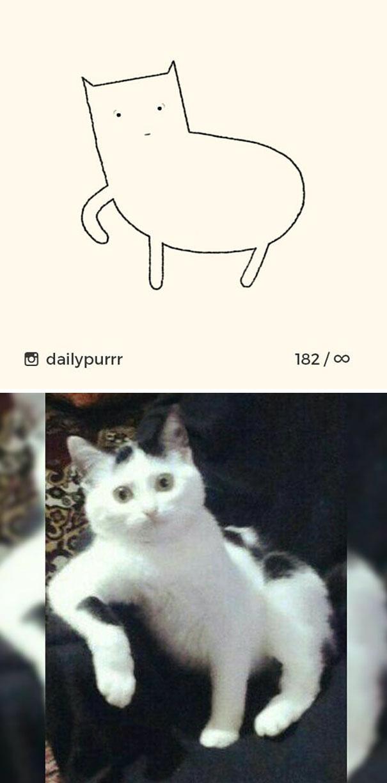 stupid-cat-drawings-dailypurrr-35-5af017df13bd9_605.jpg