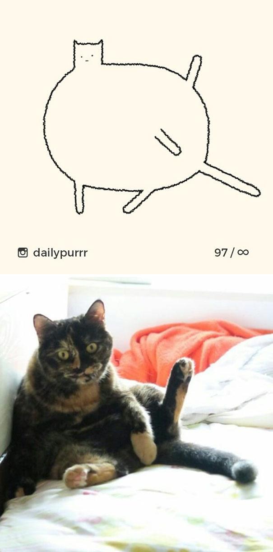 stupid-cat-drawings-dailypurrr-47-5af017f6c0e04_605.jpg