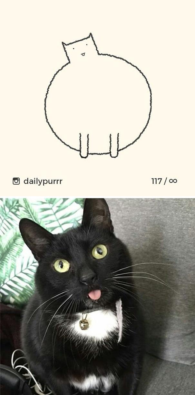 stupid-cat-drawings-dailypurrr-48-5af017f86b002_605.jpg