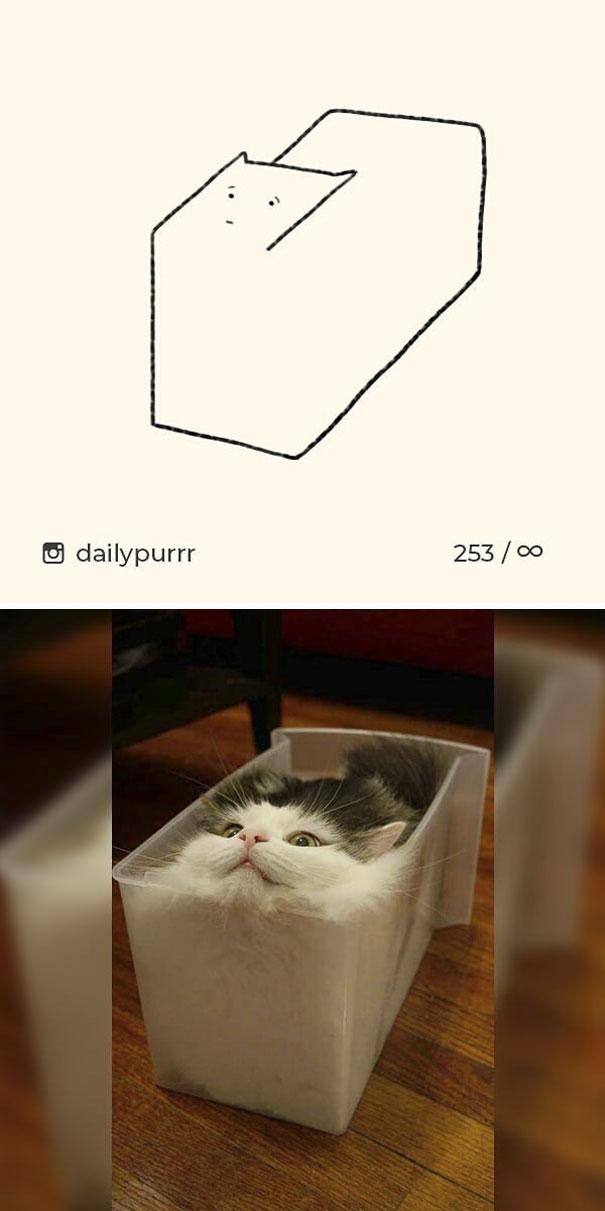 stupid-cat-drawings-dailypurrr-92-5af01858d3fdb_605.jpg