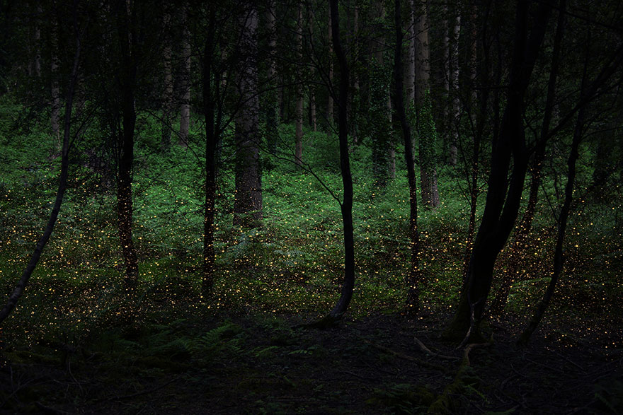 surreal-forest-photograhy-ellie-davis-8_880.jpg
