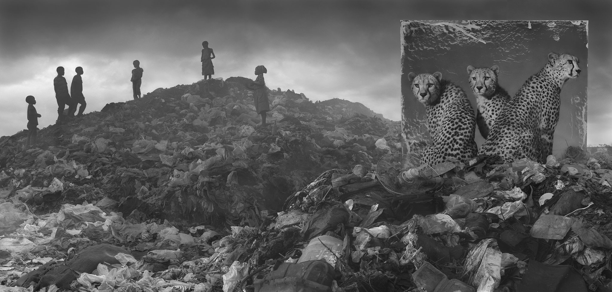 wasteland-with-cheetahs-children-3800px.jpg