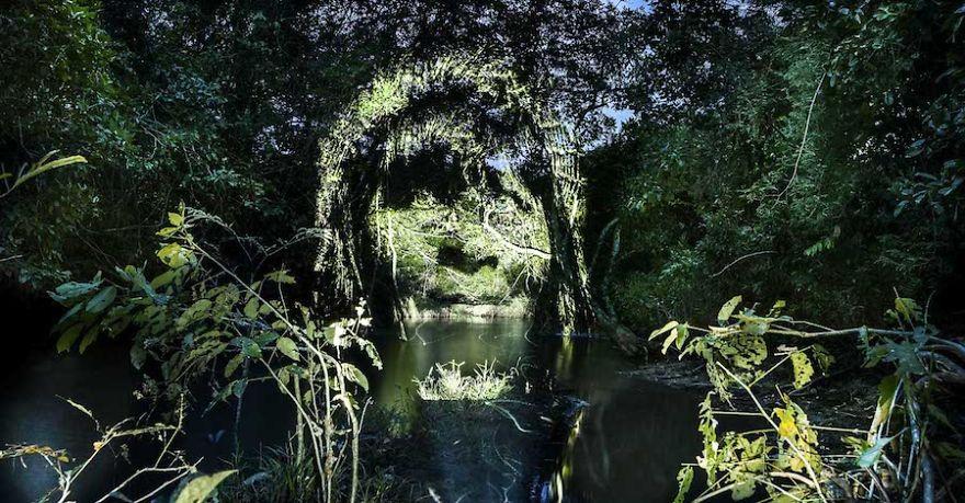 world-first-street-art-in-the-amazonian-rainforest-581ae8c8496d2_880.jpg