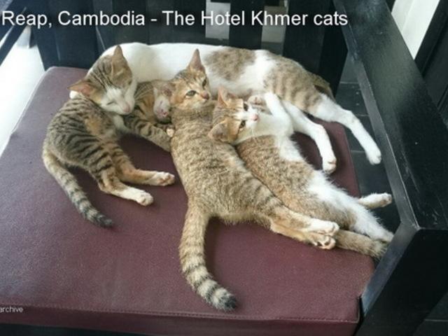 Cambodia, Siem Reap, Hotel Khmer
