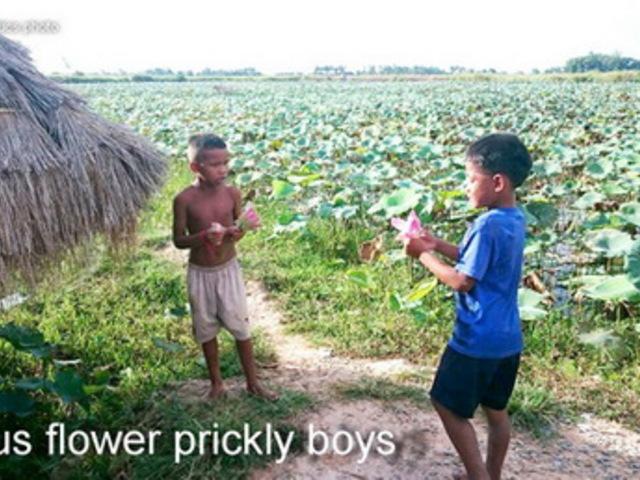 Lótuszvirágot áruló fiúk Kambodzsában a Siem Reap River mellett