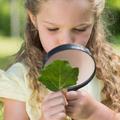 Otthontanulás - napirend kérdések