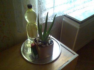 A növény a helyén :)