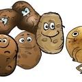 A beszélő krumpli