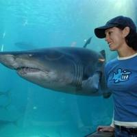 Elindulhat a cápás szülés