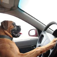 Autóval körmenetbe - Heti Normakövetés Tacskó Mukival