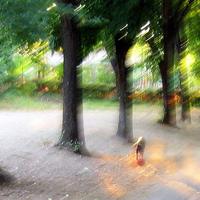 Fénnyé válnak a kutyák az I. kerületben