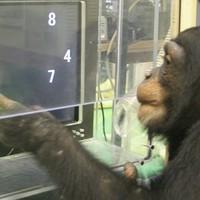 Majmokon tesztelik az MDF választási programját