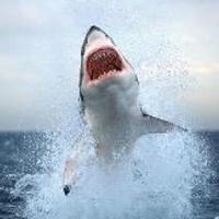 Terroristákat fogott az NBH – nagy fehér cápával a magyar nemzetgazdaság ellen