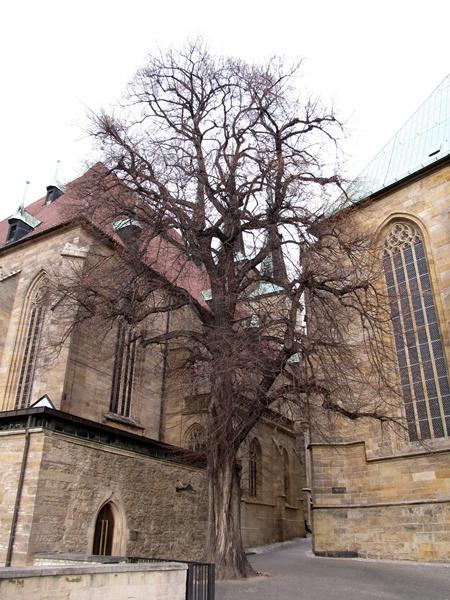 Erfurt25.jpg