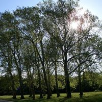 A Vértanúk fái