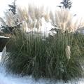 Téli kiadás: a Kertészeti Egyetem arborétuma