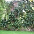 Templom-rom-kert: St. Dunstan-in-the-East, London