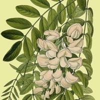 Magyar növények? I. rész: fák