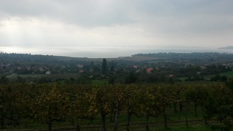 szőlők és a távol.jpg