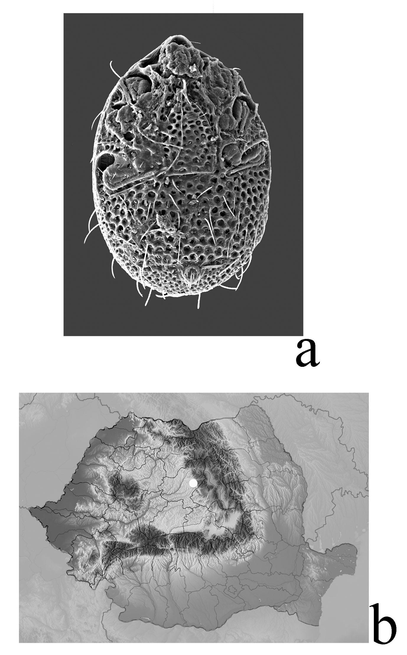 elegans.jpg