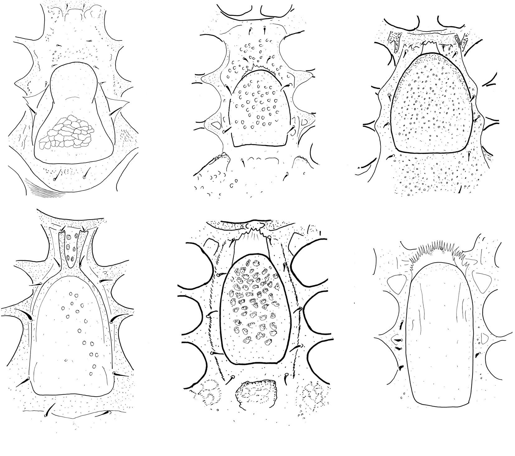 genital shields.jpg