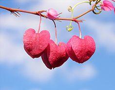 236px-string_of_hearts.jpg
