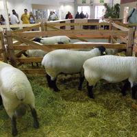 Országos Mezőgazdasági és Élelmiszeripari Kiállítás   2011.