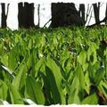 Tavaszi zöldek erdőből, mezőről
