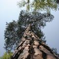 A fa teteje karcolta az ég töretlen tükrét