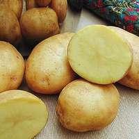 Kampány krumpli - krumpli kampány