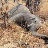 Mese a nutelláról és az elefántokról