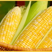 Főtt kukorica NemcsakABalcsin NemcsakNyáron
