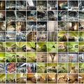 Glasgow, múzeum - építés közbeni fotók (flickr)