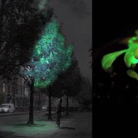 Világító fák - a medúzák DNS-ével