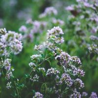 Ha egy lakó kertészkedik, jutalmat kaphat