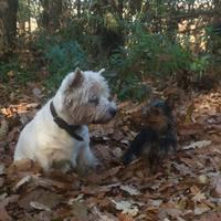 Édi kutyák összenéznek - ennél cukibb ma már nem lesz!