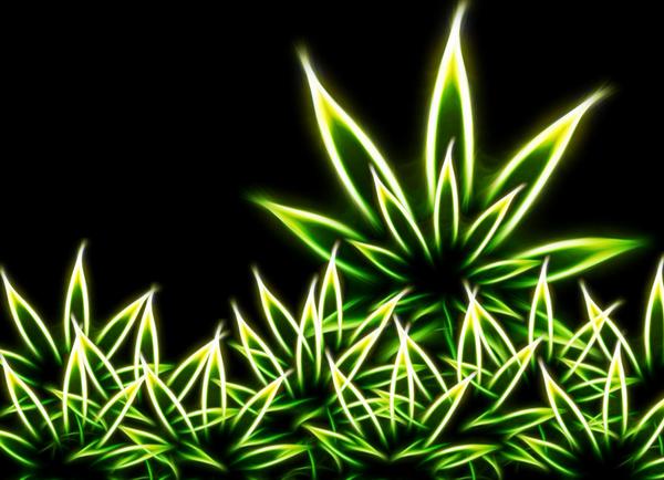 marihuana-legalizalasa.png