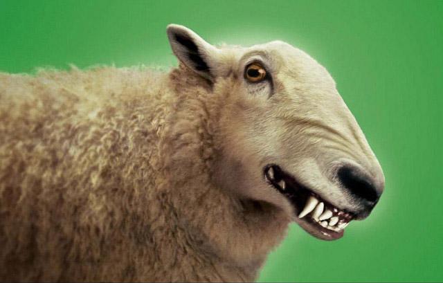 wolfsheep_1.jpg