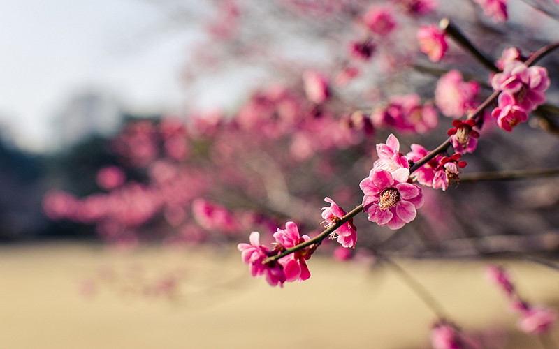 tavasz2.jpg