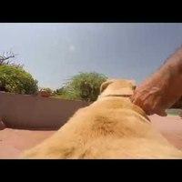 Rohanó kutya + tengerpart + GoPro = Cuki videó